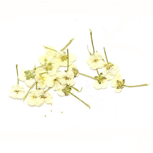 картинка Сухоцветы для дизайна 19 от магазина Gumla.ru