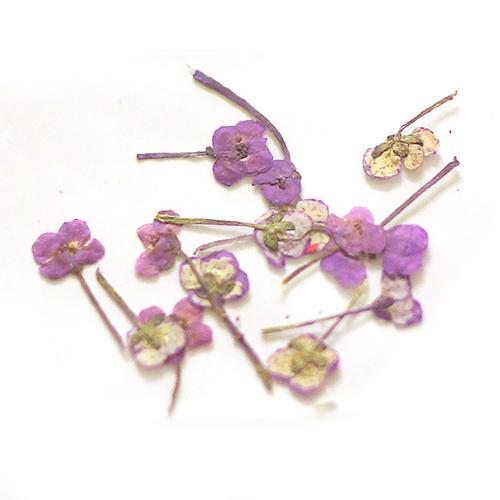 картинка Сухоцветы для дизайна 26 от магазина Gumla.ru